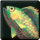 icon_item_fish04.png